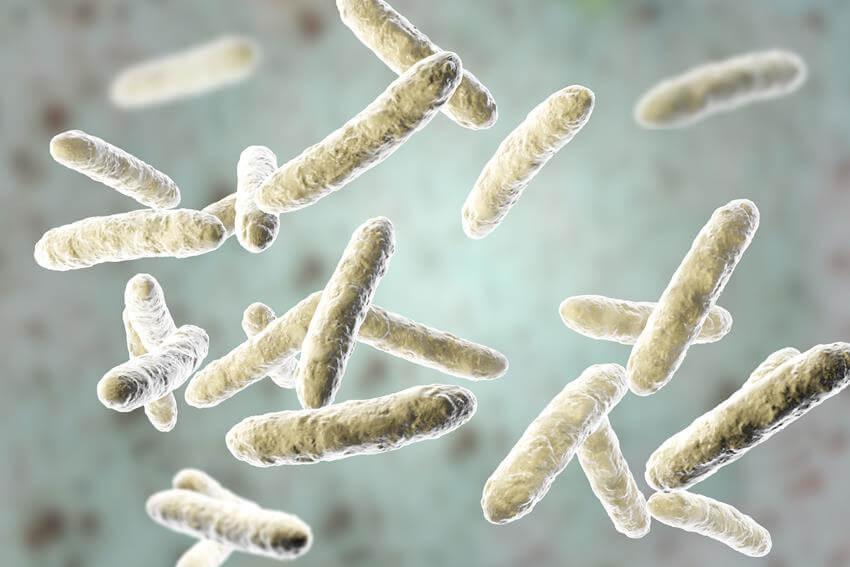 zalety probiotyków