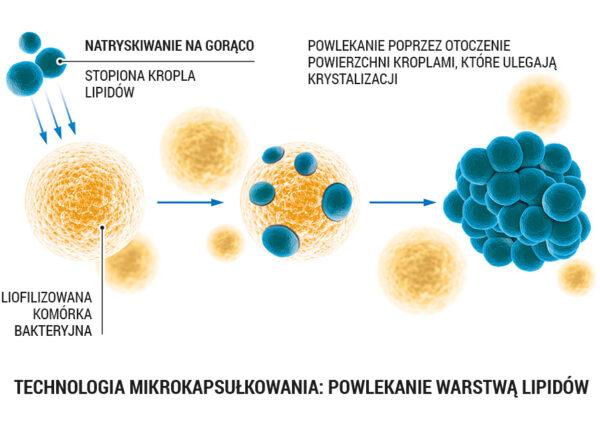 lab one probiotic 2